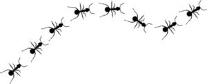 Jim Rohm la filosofía de las hormigas